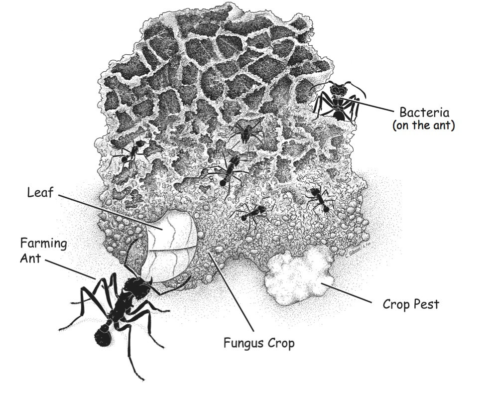 leaf cutter ant fungus relationship goals