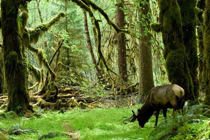 Elk butt